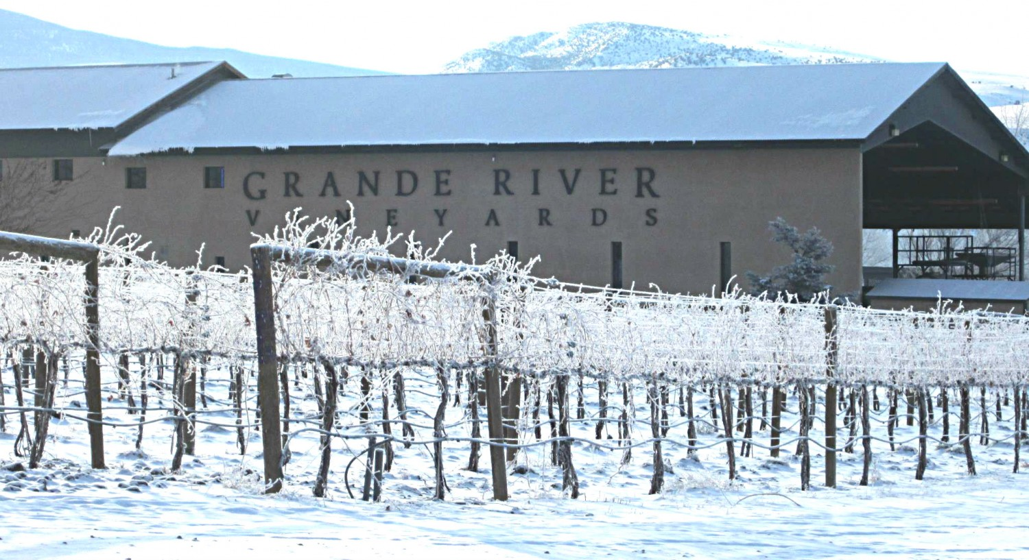 grand river vineyard in the snow