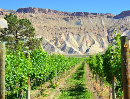 best wineries in colorado